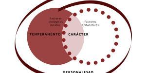 Diferencia entre temperamento, carácter y personalidad
