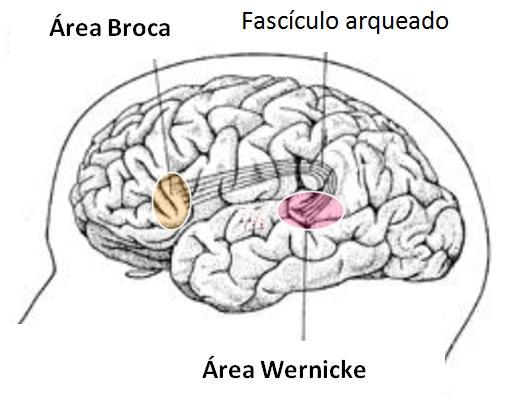 Área de Broca y Wernicke: diferencias y funciones - Área de Broca y Wernicke: diferencias