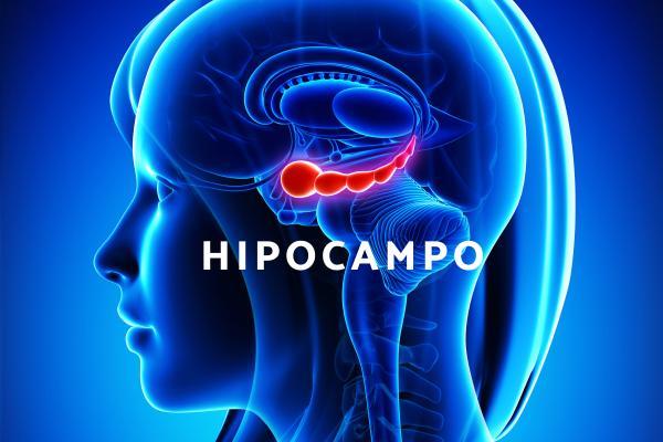 ¿Qué es el hipocampo y cuál es su función?