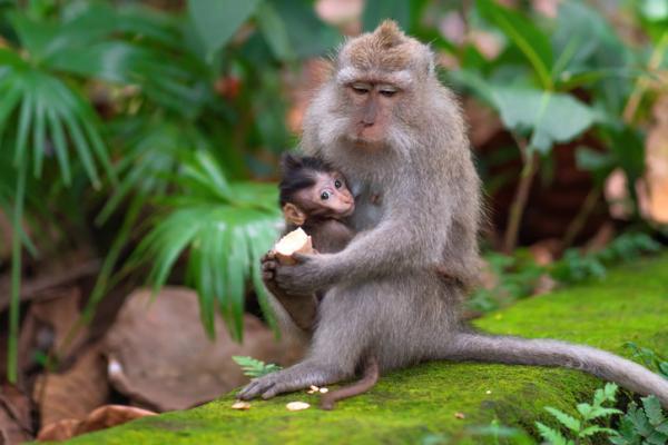 Qué significa soñar con monos