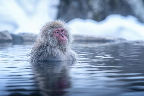 Qué significa soñar con monos - Qué significa soñar con monos blancos