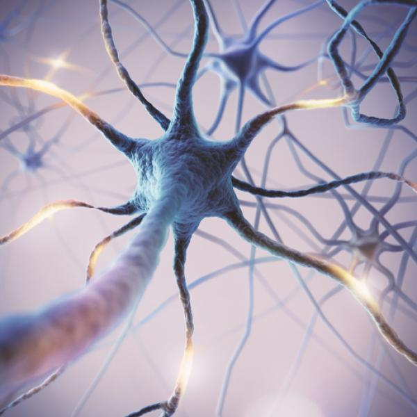 Los 9 Tipos De Neuronas Estructura Y Funciones