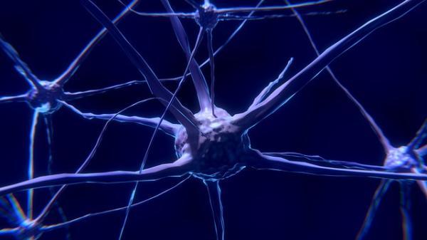 Cómo funciona el sistema nervioso - Sistema nervioso: partes y clasificación