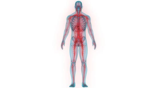 Sistema nervioso periférico: funciones y partes