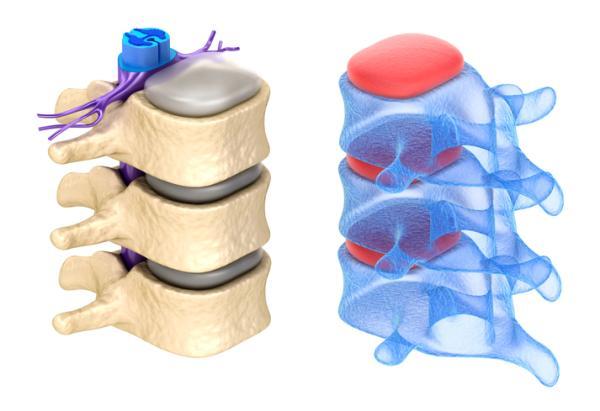 Sistema nervioso periférico: funciones y partes - Sistema nervioso periférico: partes