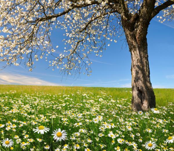 15 ejercicios de relajación para niños - 3. Abrazar un árbol