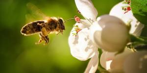 Qué significa soñar con abejas