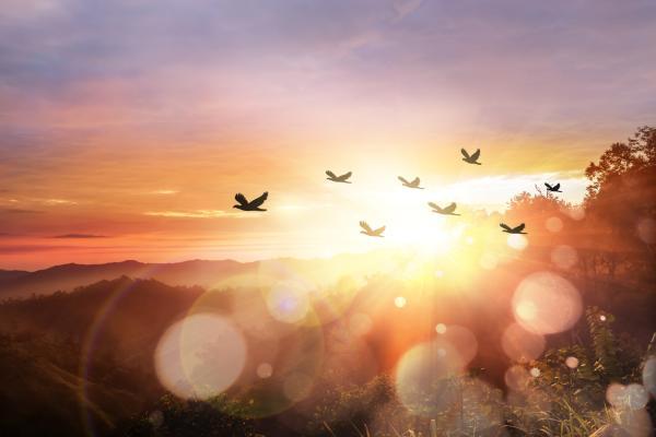 Qué significa soñar con pájaros
