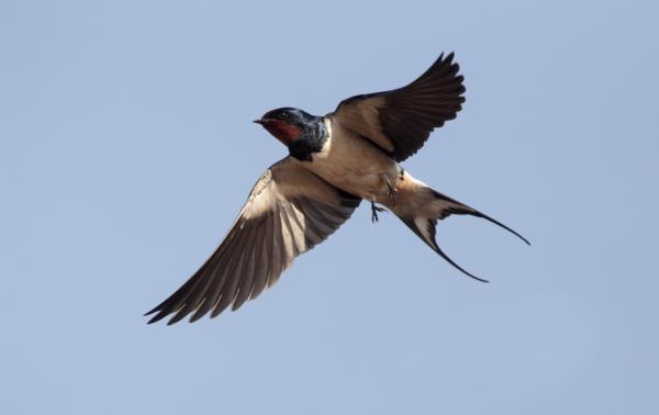 Qué significa soñar con pájaros - Qué significa soñar con pájaros en jaulas