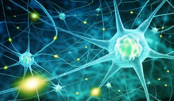Teorías biológicas de la ansiedad - Aspectos psicofisiológicos