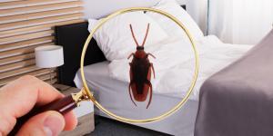 Qué significa soñar con cucarachas