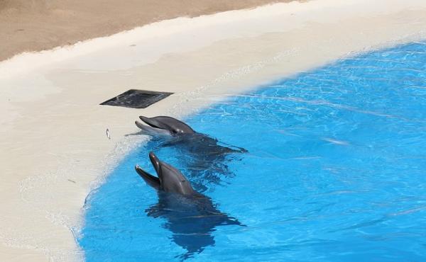 Qué significa soñar con delfines - Qué significa soñar con delfines en una piscina