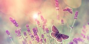 Qué significa el efecto mariposa en psicología