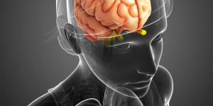 Glándula pineal: funciones, enfermedades y sus síntomas