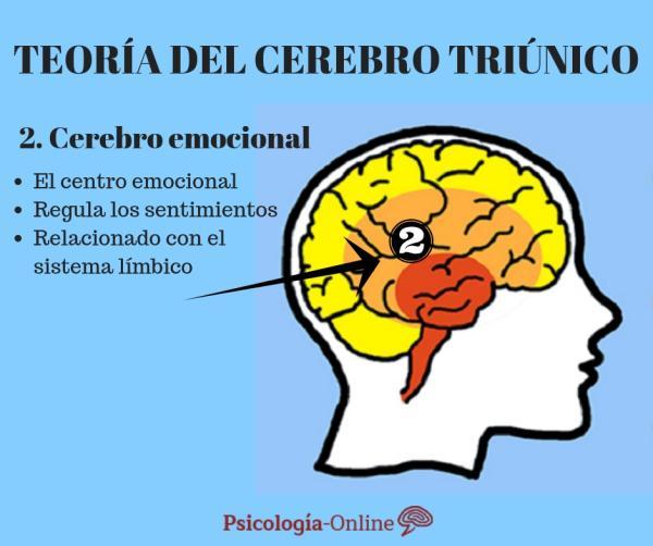 La teoría del cerebro triuno de MacLean - El cerebro emocional o límbico