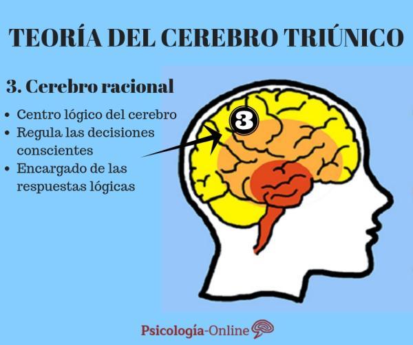 La teoría del cerebro triuno de MacLean - El cerebro racional o neocórtex