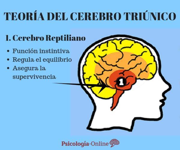 La teoría del cerebro triuno de MacLean - El cerebro reptiliano