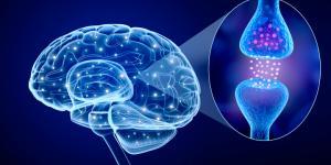 Sinapsis neuronal: qué es, tipos y cómo funciona