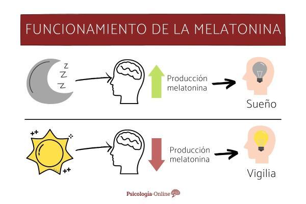 Melatonina para dormir: dosis, contraindicaciones y alimentos - ¿Para qué sirve la melatonina?