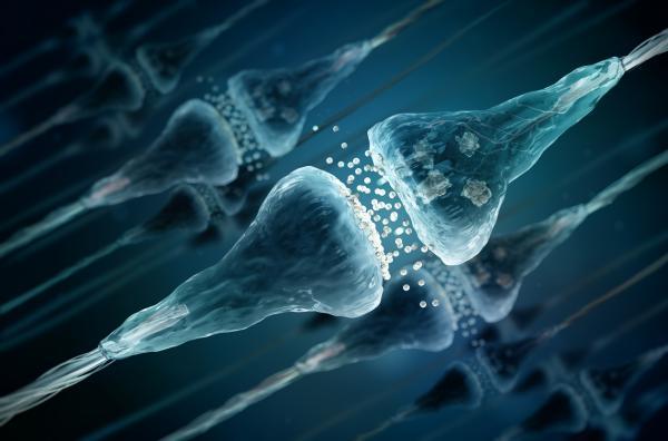 Encefalinas: qué son, función y tipos