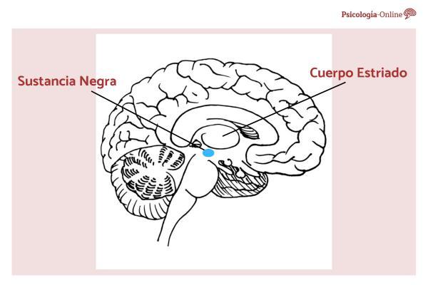 ¿Qué es la sustancia negra del cerebro y cuál es su función?