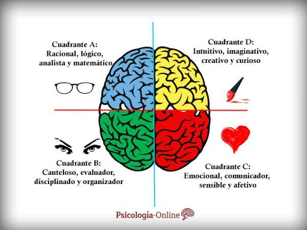 Test de Herrmann de dominancia cerebral - ¿Qué es la dominancia cerebral y en qué consiste?