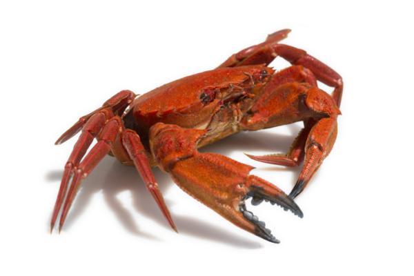 Qué significa soñar con cangrejos