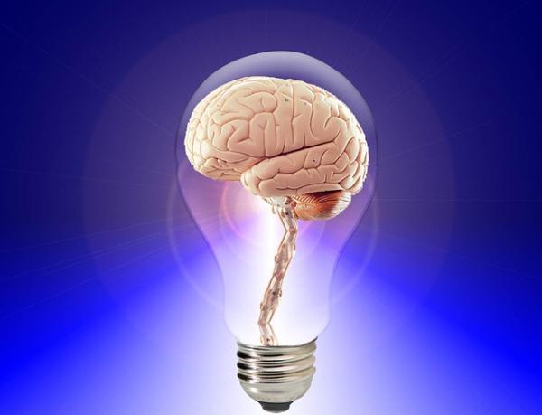 Qué es el cerebro reptiliano: partes y funciones