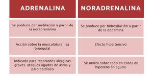Diferencias entre adrenalina y noradrenalina