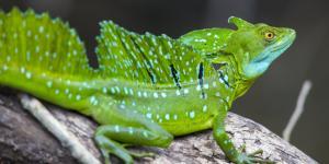 Qué significa soñar con lagartos