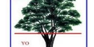 El Test del Árbol de Koch