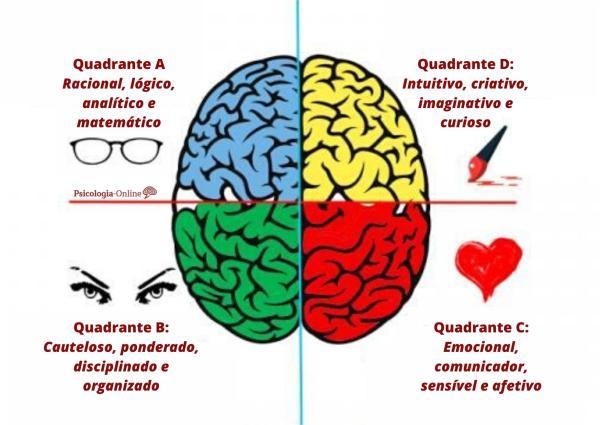 Teste de dominância cerebral de Herrmann - O que é a dominância cerebral