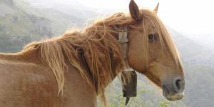 O que significa sonhar com cavalo