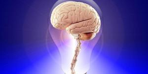 Cérebro reptiliano: o que é, características e funções