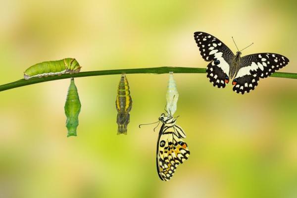 O que significa sonhar com lagarta
