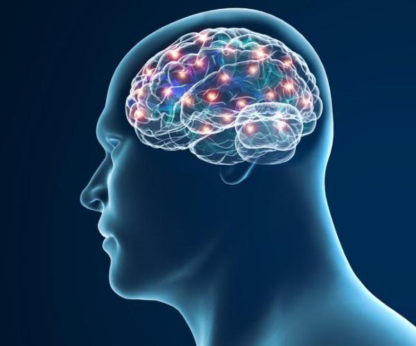 O que é sistema nervoso central: anatomia e funções