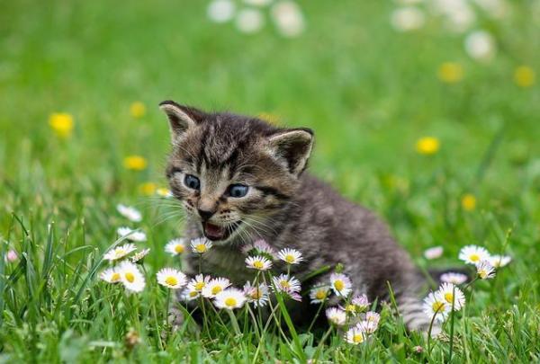 O que significa sonhar com gatos - O que significa sonhar com gato