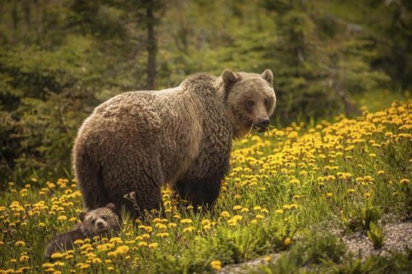 O que significa sonhar com urso - O que significa sonhar com urso marrom
