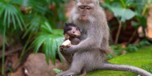 O que significa sonhar com macaco