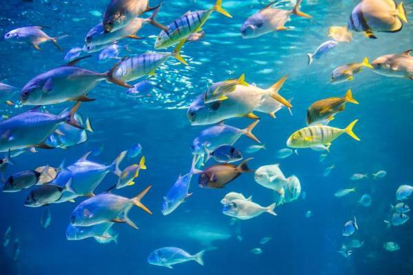 O que significa sonhar com mar - O que significa sonhar com mar com peixes