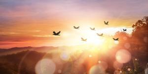 O que significa sonhar com pássaros