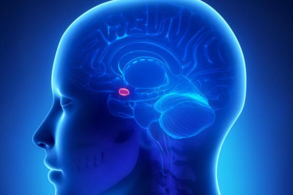 Como relaxar a amígdala cerebral