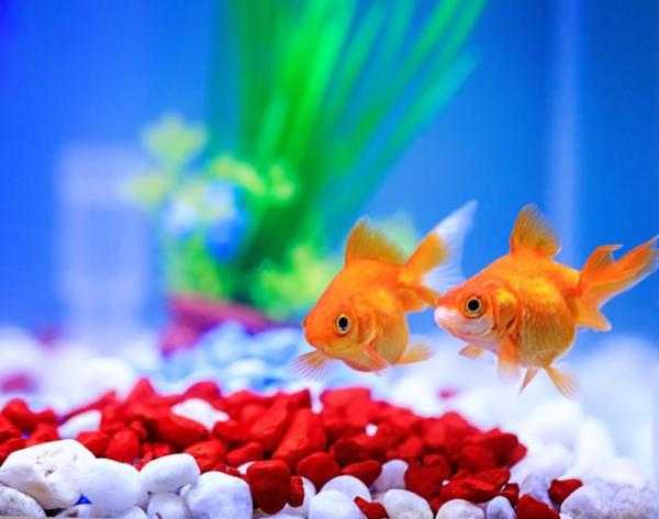 O que significa sonhar com peixe