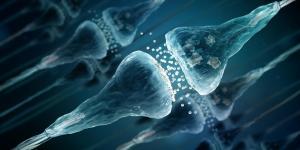 Encefalinas: o que são, função e tipos