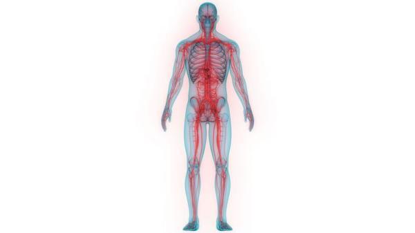 Sistema nervoso periférico: função e anatomia