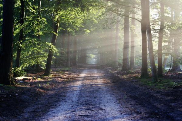 Teste psicológico do bosque - Teste psicológico do bosque: o que é